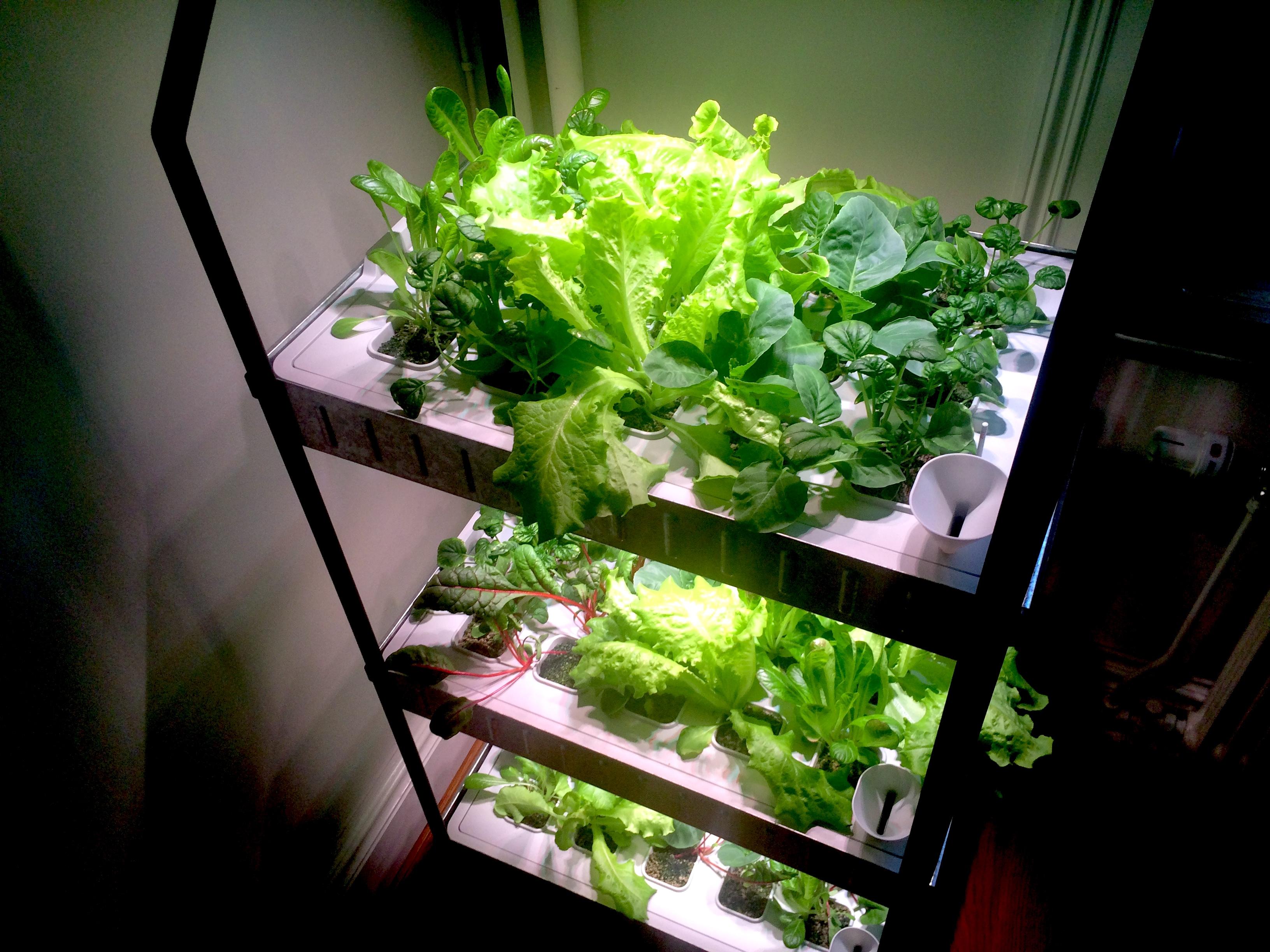 review krydda hydroponic unit